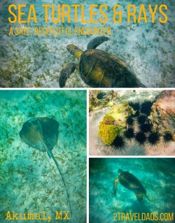 Swimming with Sea Turtles and Rays pin