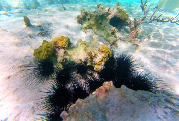 Tropical Reef and Sea Urchins Snorkeling in Akumal 1