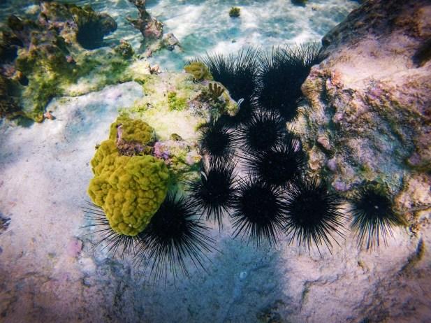Tropical Reef and Sea Urchins Snorkeling in Akumal 3
