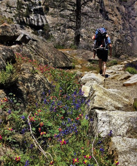 Wildflowers on Hiking path at Hetch Hetchy Yosemite National Park 1
