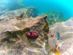 Tropical Reef while snorkeling in Labadee Haiti 2