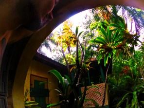 Tropical Plants and Monsoon rain at Chukka Tour House Ocho Rios Jamaica 1