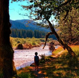 LittleMan walking the Spruce Trail on Hoh River Olympic National Park 1