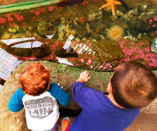 Taylor Kids Poulsbo Aquarium Touch Tank 1