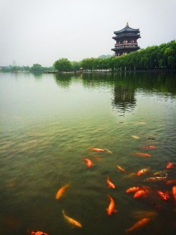 Ladies Hall pagoda at reflecting pond at Tang Paradise Xian Imperial Garden