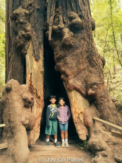 Muir Woods National Monument in California is a great family travel destination if you're visiting from overseas.