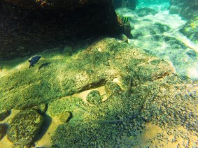 Needlefish and pufferfish while snorkeling in Cabo San Lucas