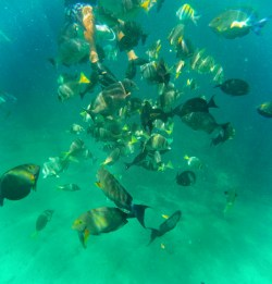 School of fish while snorkeling in Chileno Bay Cabo San Lucas