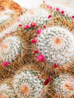Cactus in Volunteer Park Conservatory Capitol Hill Seattle 3