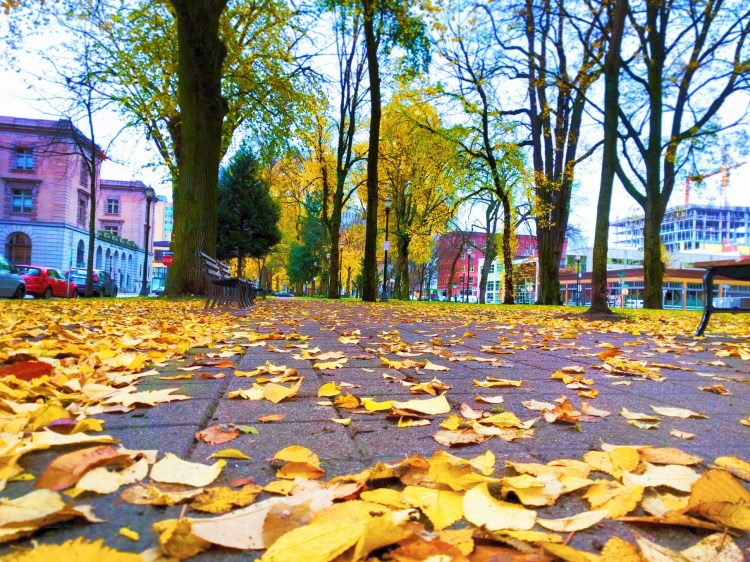 Fall leaves in downtown Portland 3