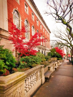 Fall leaves in downtown Portland