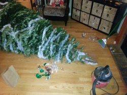 Fallen Taylor Family Christmas tree 2013