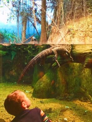 Taylor Kids at Mississippi Delta exhibit Tennessee Aquarium 1