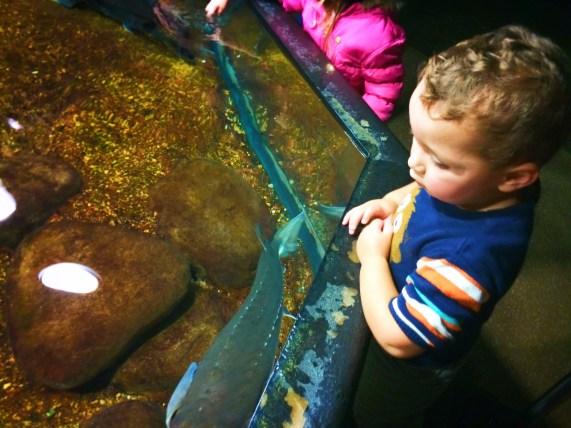 Taylor Kids at Sturgeon touch tank Tennessee Aquarium 1