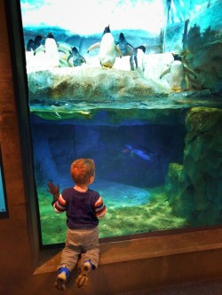 Taylor Kids with Penguins at Tennessee Aquarium 2