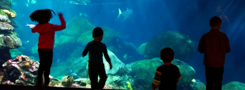The USA has many aquariums, but the Tennessee Aquarium in Chattanooga provides the best collection of species with learning and visible conservation effort.