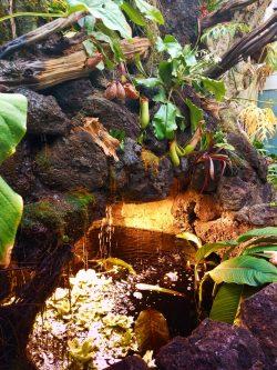 Tropical waterfall in atrium at Tennessee Aquarium 1