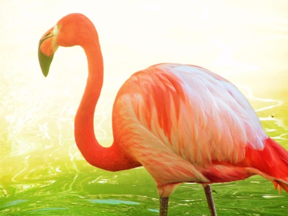 Flamingos in Everglades National Park 2