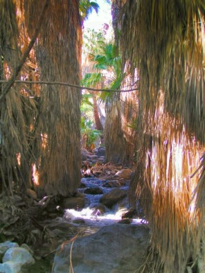 Stream through palms in Indian Canyons at Agua Caliente Palm Springs 1