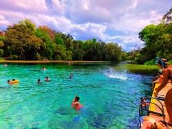 Swimming platform at Rainbow Springs Florida State Park 3