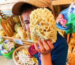 Taylor Family Sponge Shopping in Tarpon Springs Florida 2