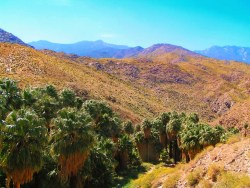View of Indian Canyons at Agua Caliente Palm Springs 1