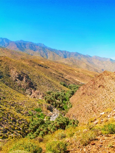 View of Indian Canyons at Agua Caliente Palm Springs 3