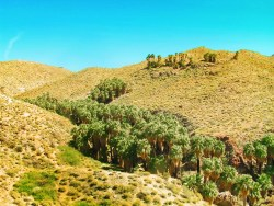 View of Indian Canyons at Agua Caliente Palm Springs 2
