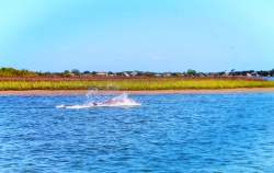 Dolphins in Matanzas River during St Augustine Ecotours 3