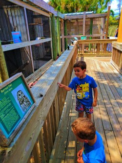 Taylor Family at Ponce Inlet Marine Science Center Bird Recovery 1