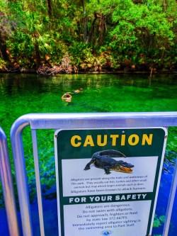 Alligator safety sign at Blue Spring State Park Daytona Beach 1