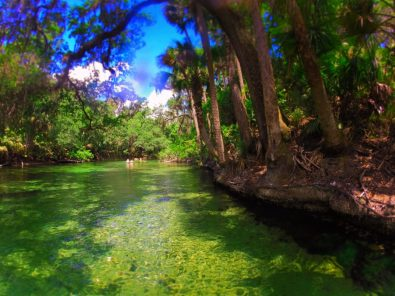 Crystal clear water at Blue Springs State Park Daytona Beach 3