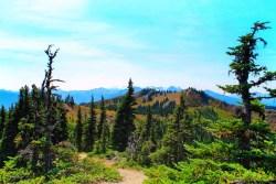 Hiking Trail Hurricane Ridge Olympic National Park 1