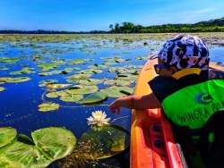 Taylor family kayaking with Wingra Boats Madison Wisconsin 12