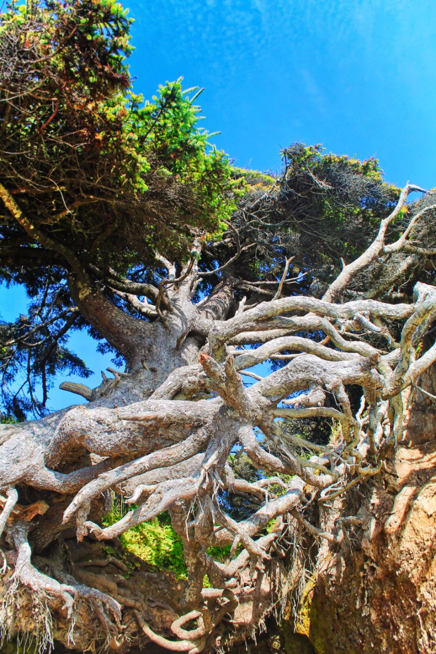 Hanging tree cave at Kalaloch Olympic National Park 5