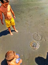 Moon jellyfish on sandbar at Ruby Beach Olympic National Park 1