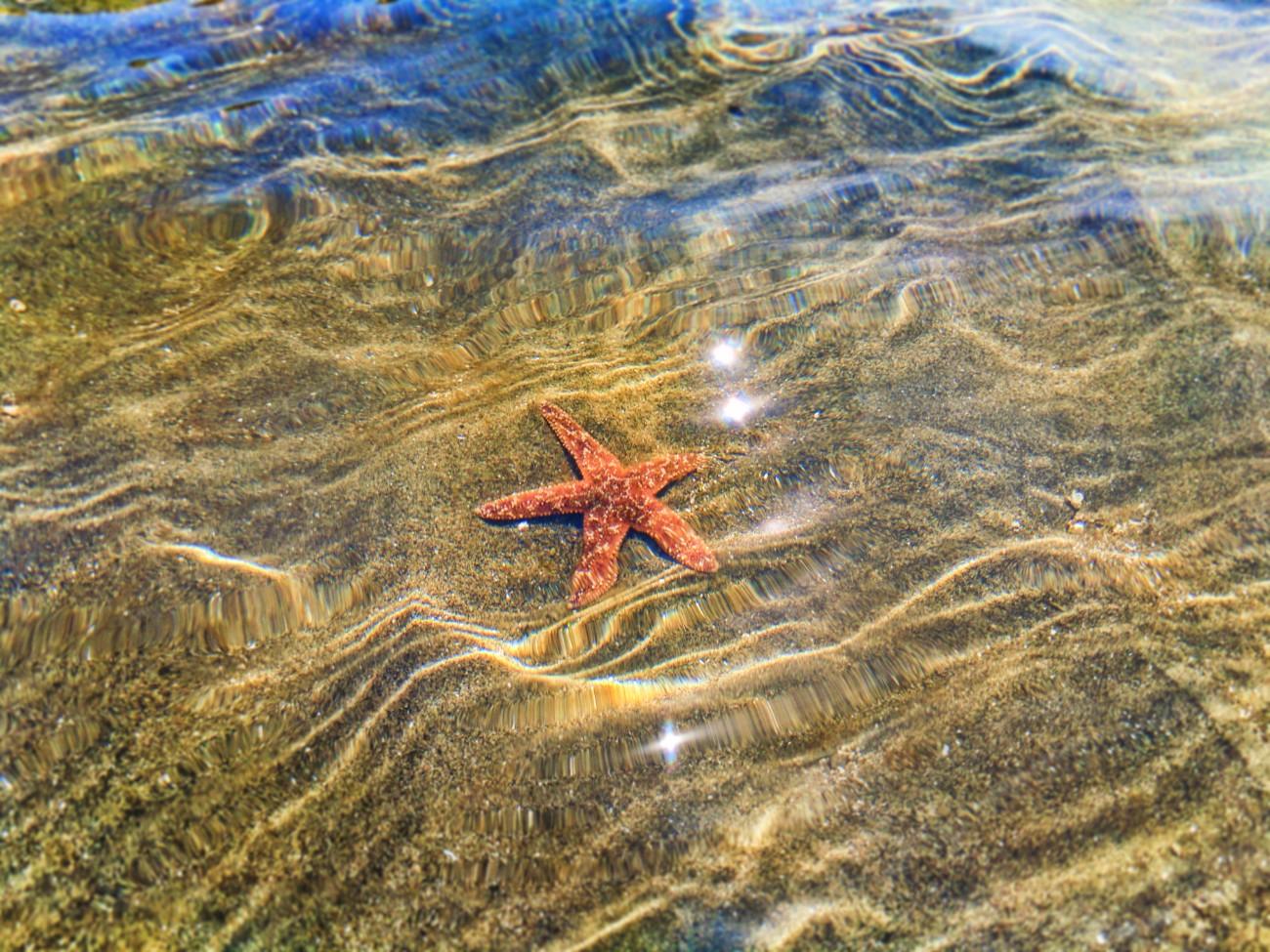 Sea star on sandbar at Ruby Beach Olympic National Park 1