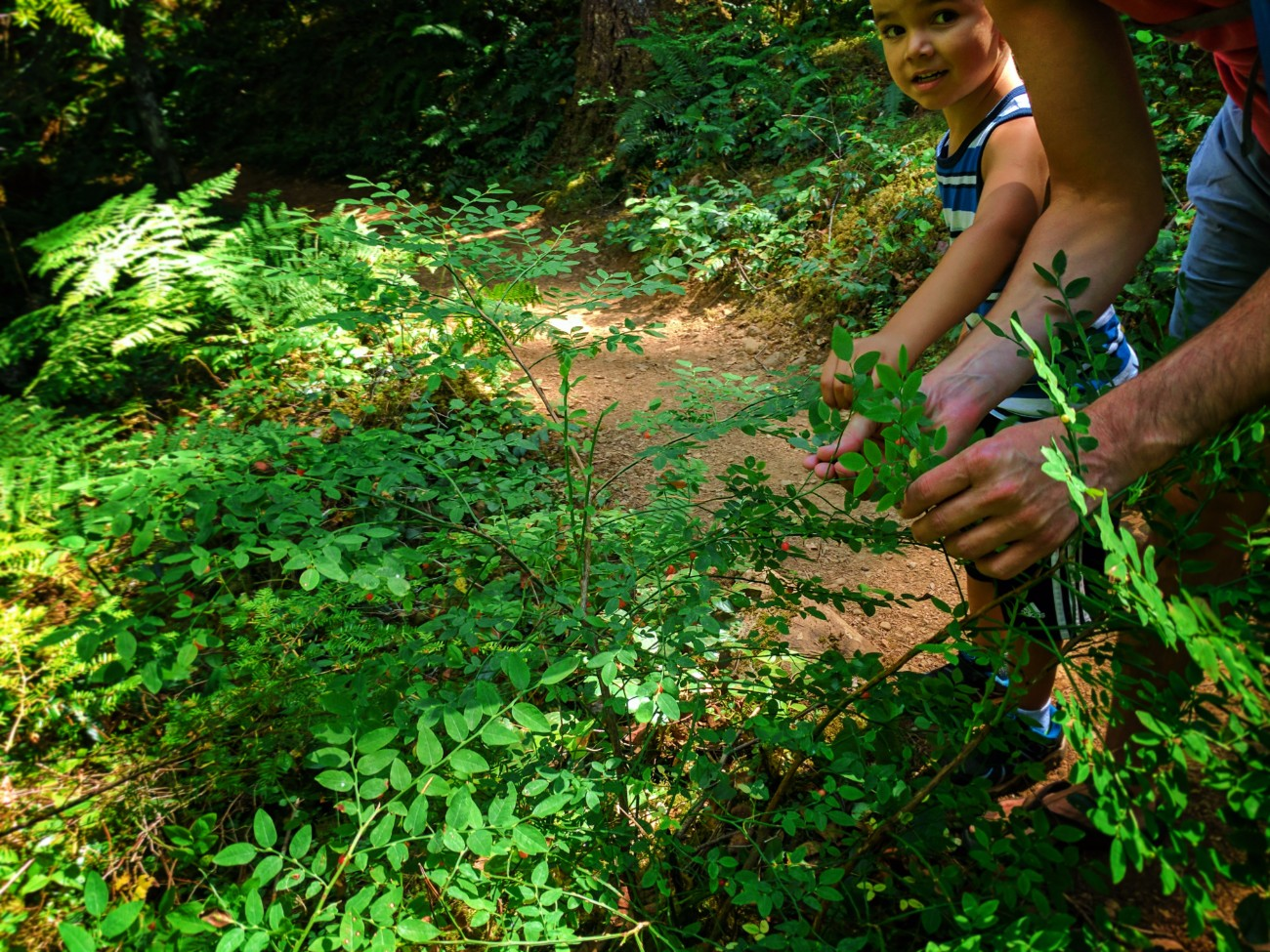 Taylor Family Picking huckleberries at Murkut Falls Olympic National Forest 1