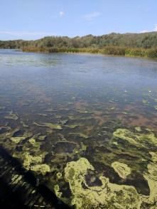 Pond at Oso Flaco State Park Santa Maria Valley 2