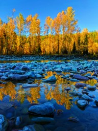 Fall Colors reflecting on River Flathead National Forest Montana 3