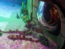 Taylor Family and sharks at SEA LIFE Arizona Tempe 1