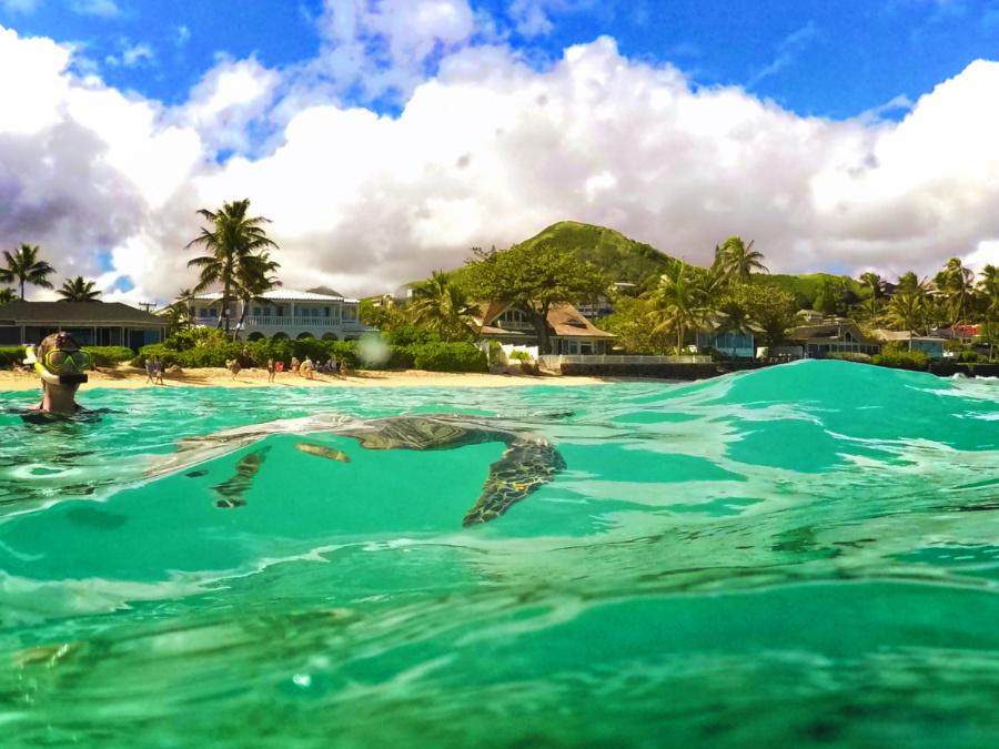 Hawaiian green sea turtle at Lanikai Oahu