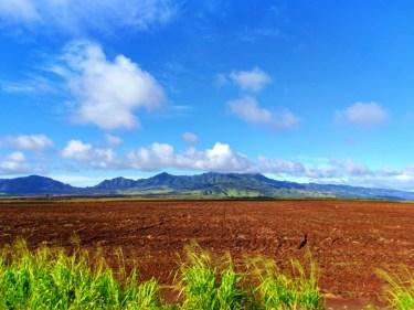 Pineapple farm on the Kamehameha Highway in Alamo Jeep on North Shore Oahu 2