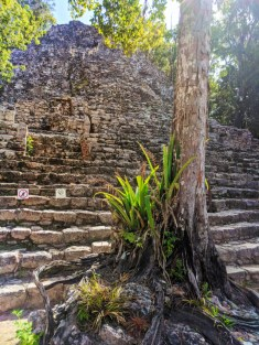 Pyramid steps at the Coba Mayan Ruins Yucatan 1