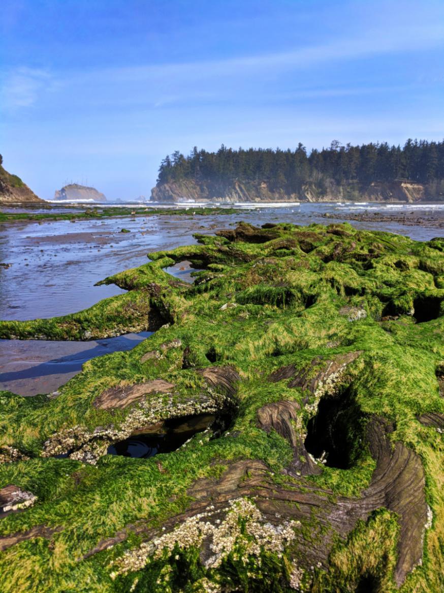Driftwood at Tide Pools at Sunset Bay State Park Coos Bay Oregon Coast 2