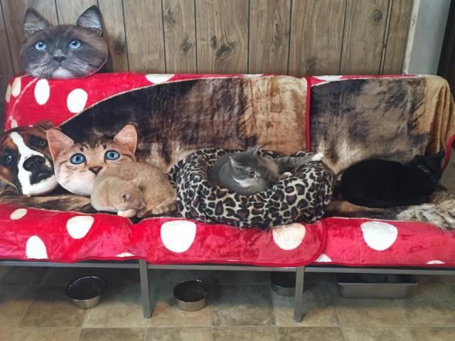 adoption center couch