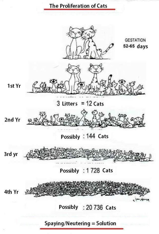 spay and neuter graphic