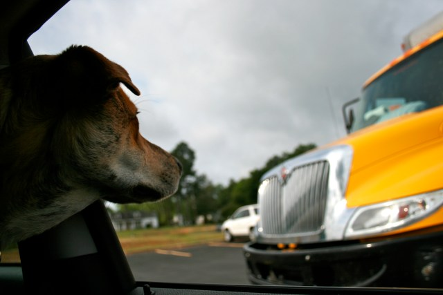 johnson-move-dog-with-penske-truck.jpg