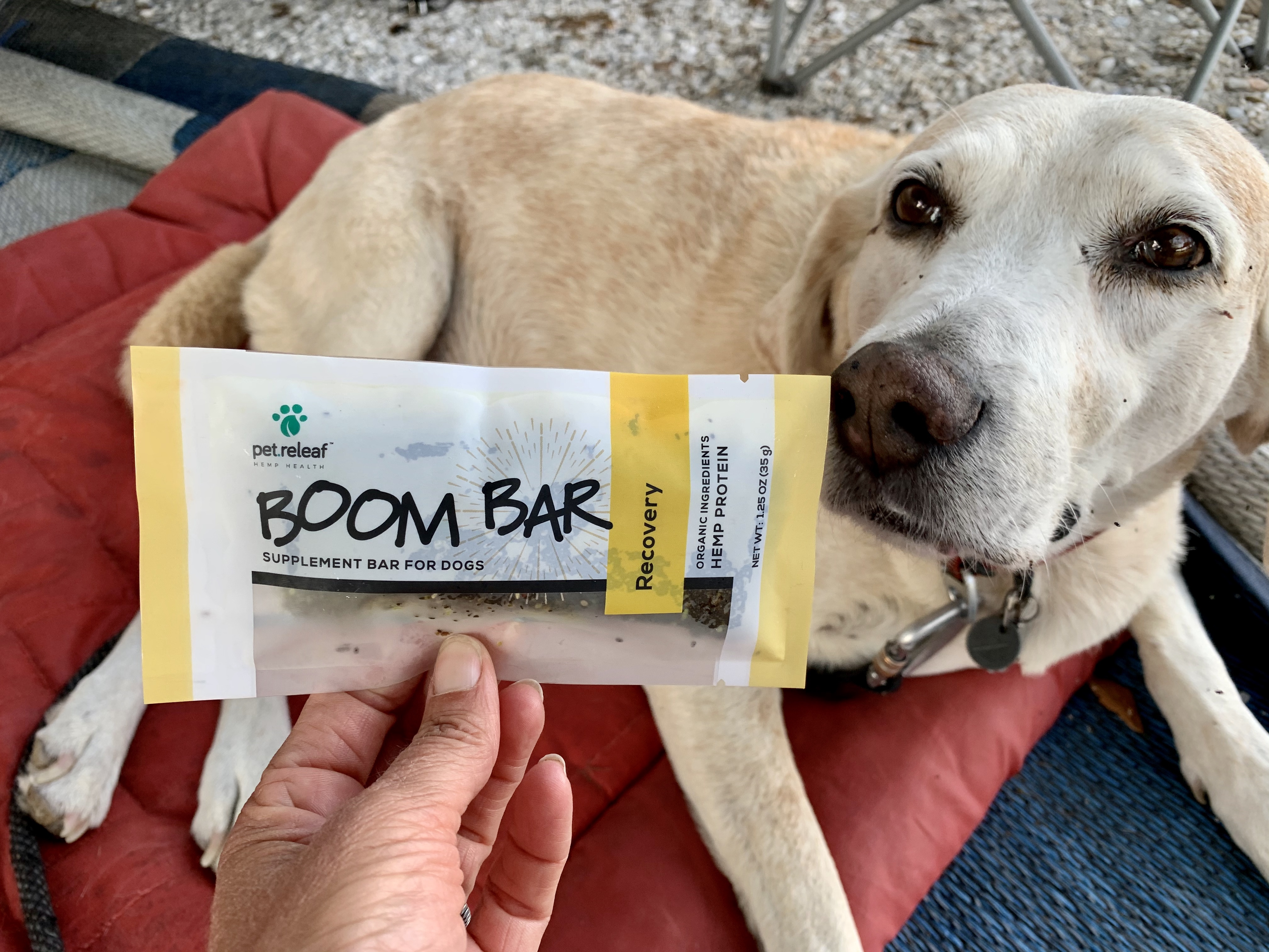 Boom Bars For Dogs From Pet Releaf 2 Traveling Dogs