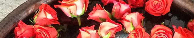 san miguel roses